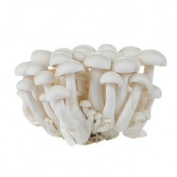 Fresh Vegetable Shimeji Mushroom White 150g