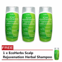 EcoHerbs Scalp Herbal Shampoo Stops Hair loss, Dandruff, Oily, Itchy Scalp, Lice Problems (150ml) - Buy 3 Free 1