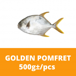 Golden Pomfret 金鲳鱼 Ikan Bawal Fish 500g+/- per piece (Sold per Piece)
